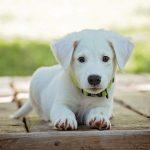 Krmivo pro psa vybíráme podle rasy, věku a velikosti